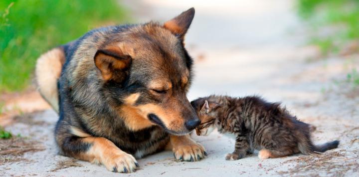 Causas del estrabismo en perros