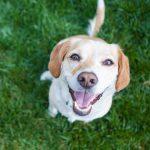 Conoce la dieta ACBA para perros