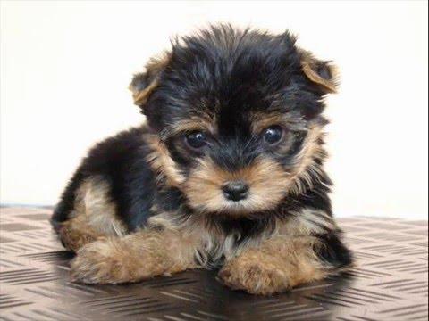 Consejos básicos para saber cómo entrenar a un perro
