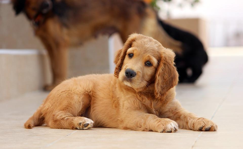 Consejos para enseñar a tu perro órdenes básicas