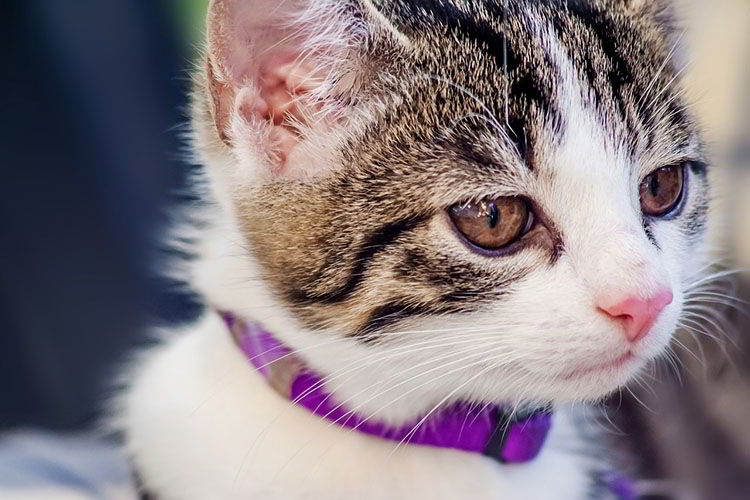 Consejos para prevenir las bolas de pelo en gatos