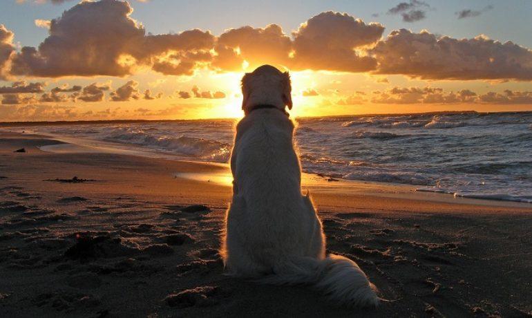 Consejos para proteger al perro del sol