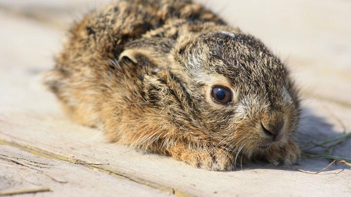 Cuántas horas duerme un conejo