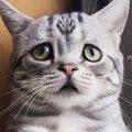 Depresión en gatos