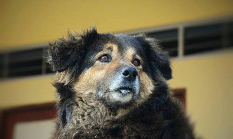 Descubre cómo saber si mi perro tiene parásitos