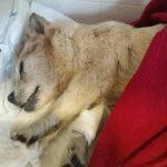 El cruel abandono de la perra que ha conmocionado Tarragona