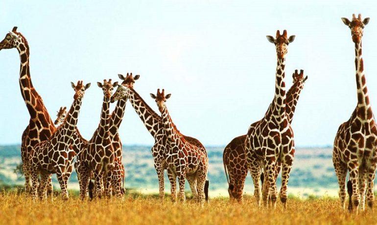 El nuevo palo selfie para jirafas