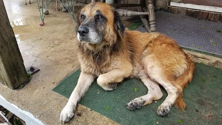 El perro que pasó solo el huracán Harvey