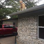 El perro que tiene por costumbre subirse al tejado
