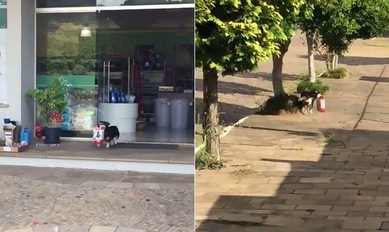 El perro que va solo a comprar su propio pienso