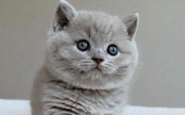 Entérate de todo sobre la deshidratación en los gatos