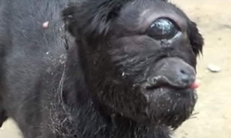 Esta cabra nació con un solo ojo