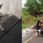Este perro abandonado hace regalos a la mujer que le alimenta día a día