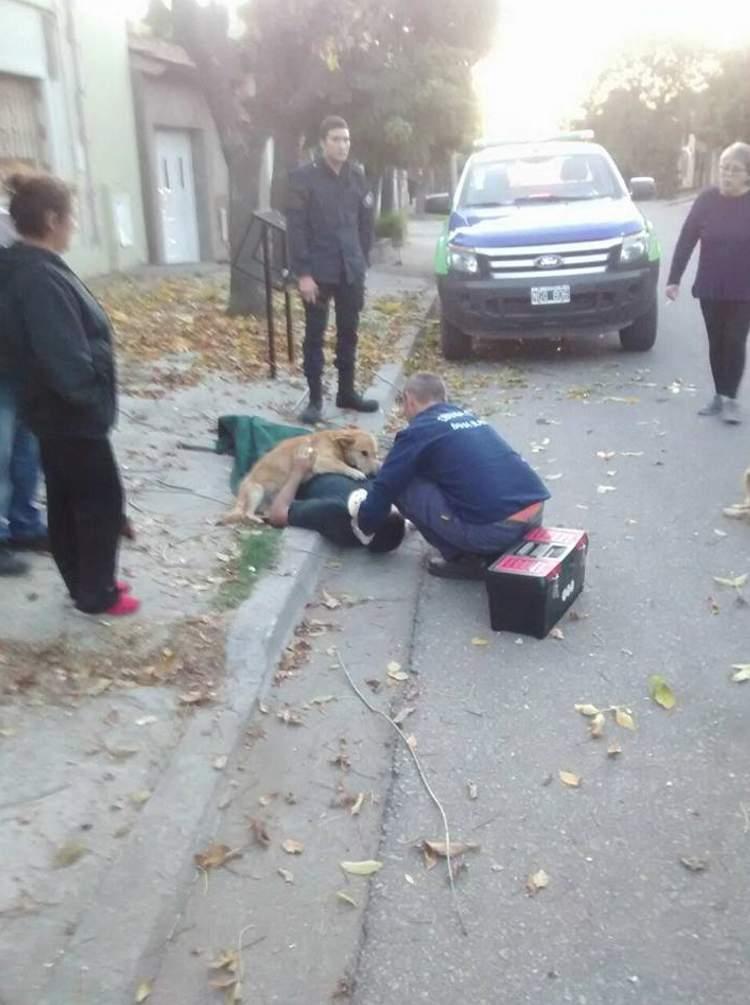 Este perro abrazó a su dueño herido hasta que llegó la ambulancia
