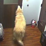 Este perro se escapó del veterinario para reunirse con su familia