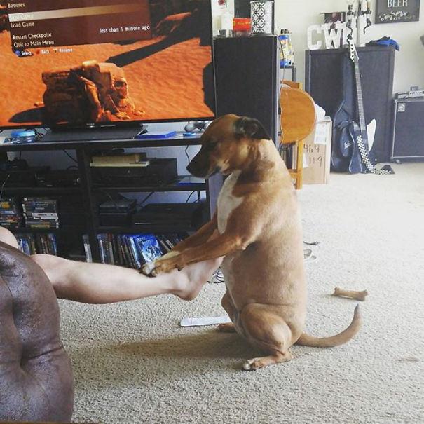 Fotos de perros que están haciendo cosas REALMENTE raras
