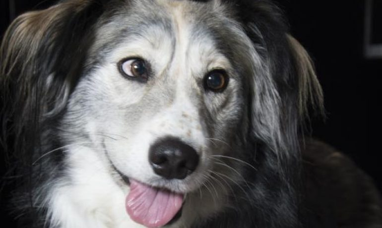 Hablamos sobre el estrabismo en perros