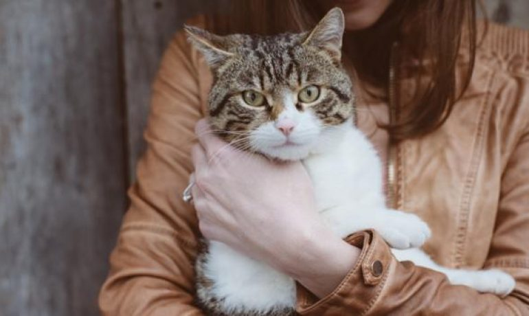 Hepatitis en gatos