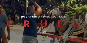 Injusticia animal en las competiciones de Tiro y Arrastre de Valencia