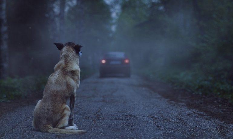 La conmovedora campaña contra el abandono de animales de Affinity