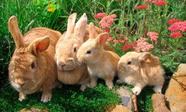 Lo que necesitas saber sobre las vacunas para conejos