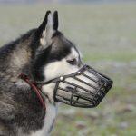 Los principales problemas de conducta en perros