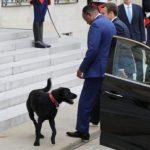 Nemo el perro adoptado por la familia del presidente Macron
