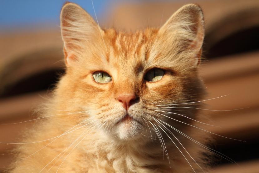No todos los gatos tabby son iguales