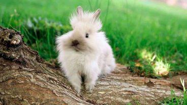 Otitis en conejos