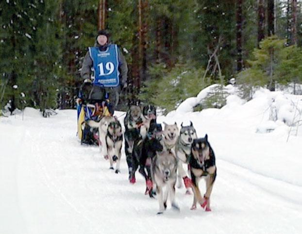 Otros cuidados para los perros que practican mushing