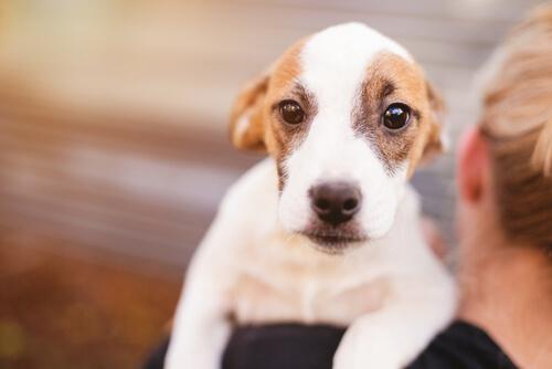 Por qué los perros tiemblan