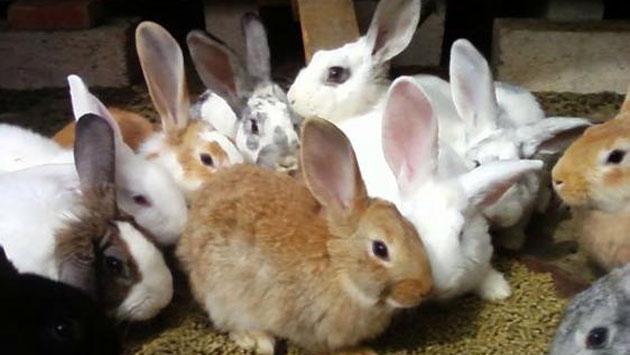 Qué es la conjuntivitis en conejos