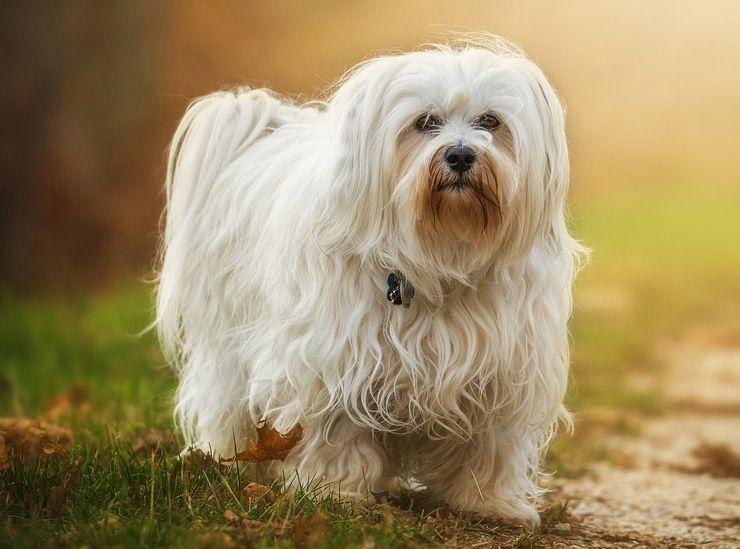 Qué es la siringomielia en perros