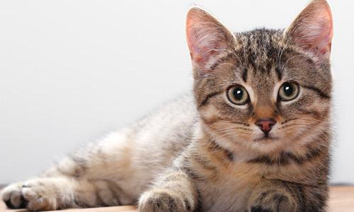 Qué hacer ante la deshidratación en gatos