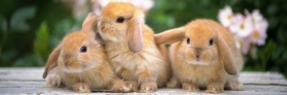 Qué hacer ante la fiebre en conejos