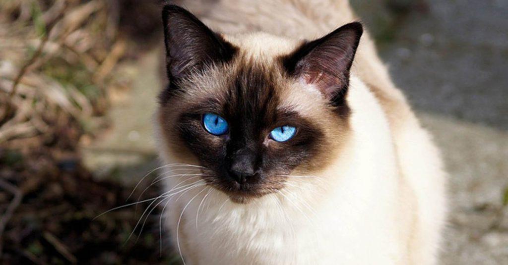 Qué son los tricobezoares en gatos