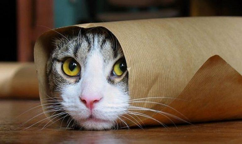 Riesgos de las mudanzas para los gatos