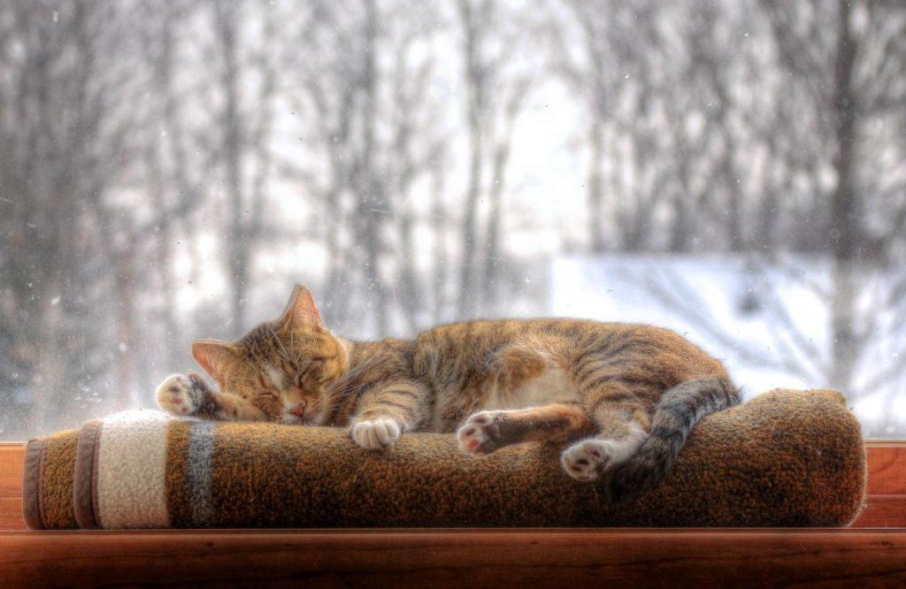 Síntomas de la cistitis idiopática felina