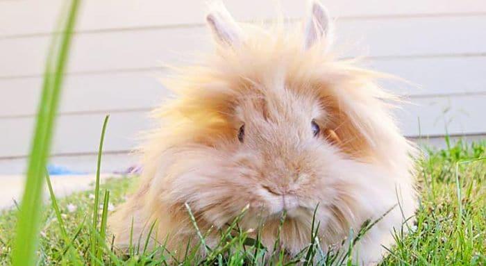Síntomas de la coccidiosis en conejos