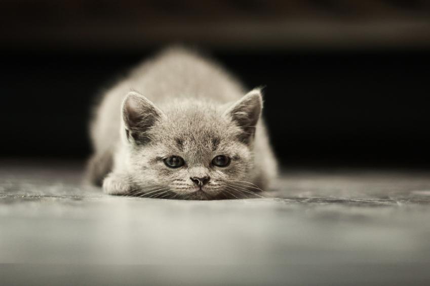 Síntomas de la depresión en gatos