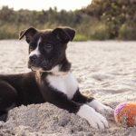 Te contamos cómo enseñar a un perro a tumbarse
