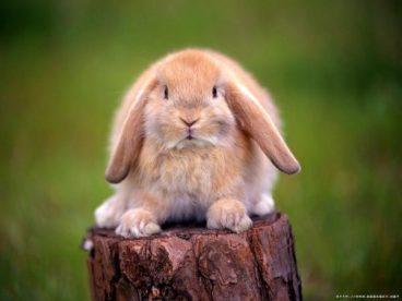 Te contamos la enfermedad de la pasteurella en conejos