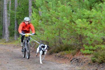 Te hablamos del bikejoring o ciclismo con perro