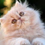 Te hablamos sobre la gastroenteritis felina