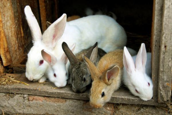 Todo sobre la conjuntivitis en conejos causas s ntomas y for Cria de peces para consumo humano