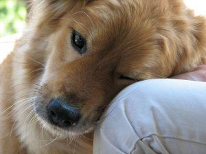 Te lo contamos todo sobre la neumonía en perros