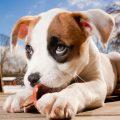 Todo lo que debes saber sobre la parainfluenza canina