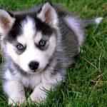 Todo sobre la fiebre en perros