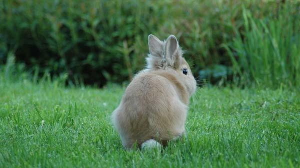 Tratamiento de la coccidiosis en conejos