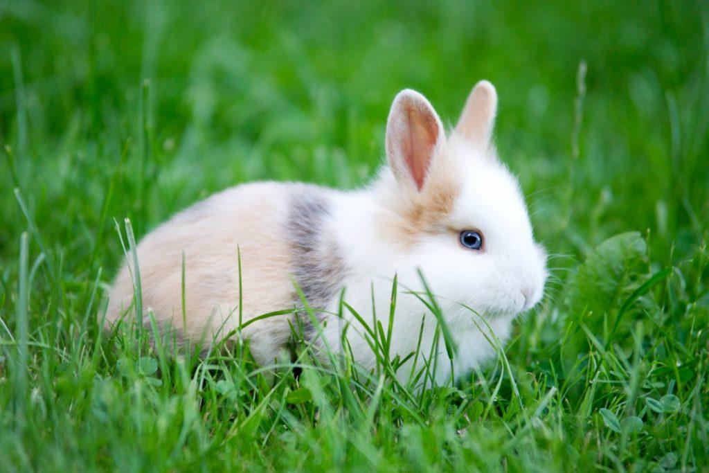 Tratamiento de la mastitis en conejos